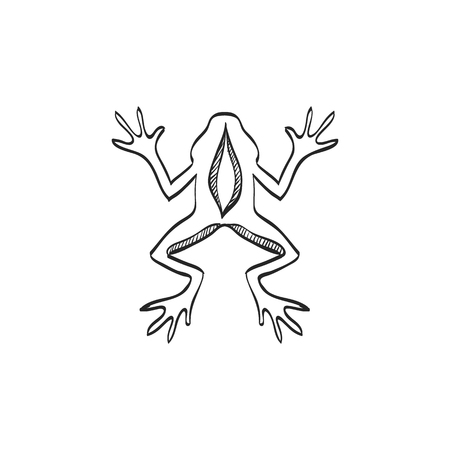biology lab: Lab frog icon in doodle sketch lines. School experiment biology lesson study