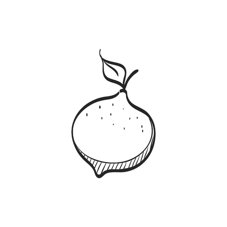 tropical: Lemon icon in doodle sketch lines. Food fruit vitamin healthy diet citrus ingredient Illustration