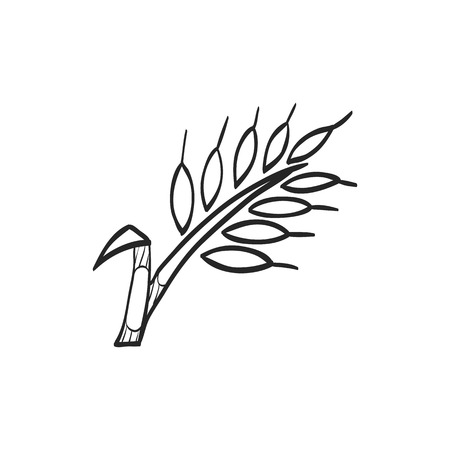 seed: Wheat icon in doodle sketch lines. Cereal seeds baking gluten harvest