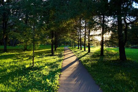 Trees in the park in sun rays Stock Photo - 626685