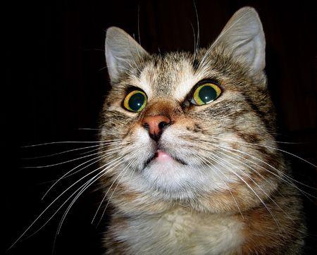 catfood: Gatto con lunghi baffi Archivio Fotografico