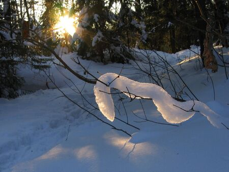 Snow snake on branch photo