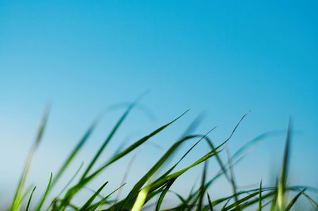 Curved grass on blue background photo