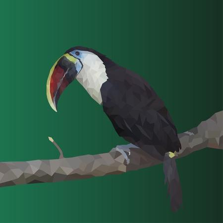 toucan: Polygonal toucan