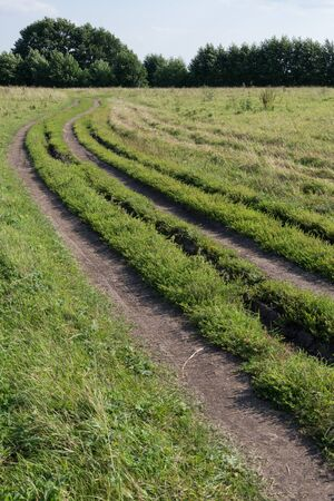 off road racing: Cars tracks from several cars on the field. Car tracks, grass and trees. Stock Photo