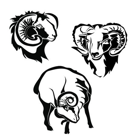 Black and white sheep, Figure lamb Illustration