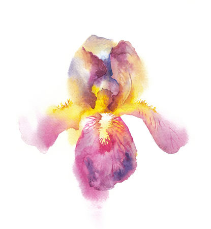 Irises written by hand in waterkolor, a bright flower of purple iris painted with colors for design Stock Photo