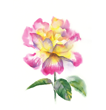 Delicate flower roses with watercolors