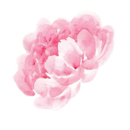 watercolor pink peony Illustration