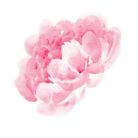 watercolor pink peony 向量圖像