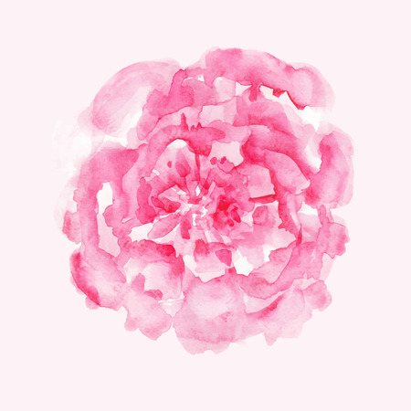 Rosa Pfingstrose Vektorgrafik