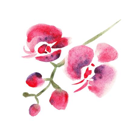 Rote Orchidee Vektorgrafik