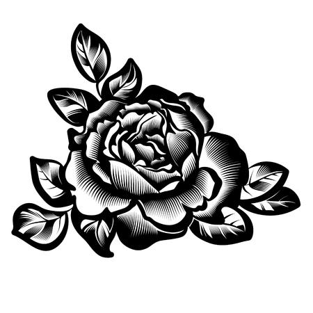vintage rose flower illustration. Illustration