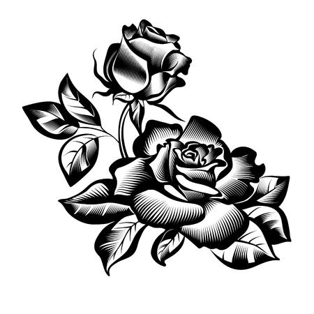 fleurs roses roses