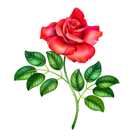 3D illustration of red rose flower on white background, vector clip art realistic branch of beautiful rose Ilustracja