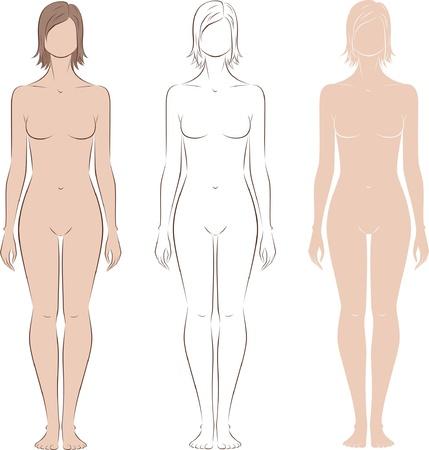 corps femme nue: Vector illustration de la figure Front view silhouettes de femme