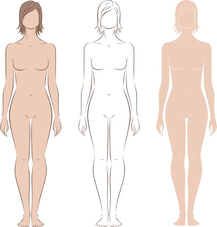naked female body: Vector illustration of women s figure  Front view  Silhouettes