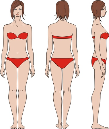 Vector illustration of women s figure  Front, back, side views