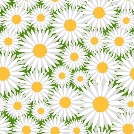 camomile flower: Vector illustration of seamless pattern with camomiles