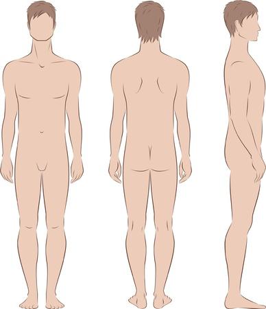 anatomie mens: illustratie van de mannen s figuur Voorkant, achterkant, zijkant uitzicht Silhouettes