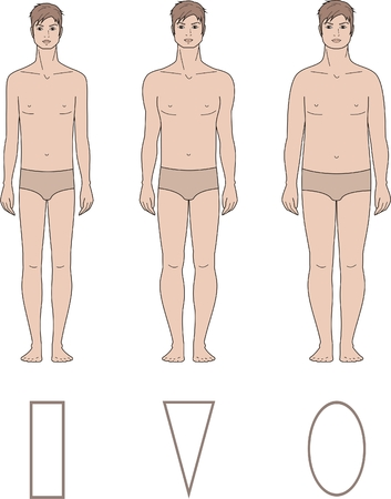 proportions of man: illustration of male figure  Different body types Illustration