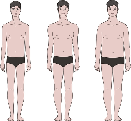 naked male: Vector illustration of male figure  Different body types Illustration