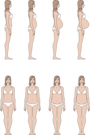 silueta humana: Ilustración vectorial de la figura de las mujeres embarazadas. Cambio en proporciones de 1 trimestre de nacimiento. Vistas frontales y laterales