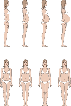 proportions: Vector illustration of pregnant womens figure. Change in proportions from 1 trimester to birth. Front and side views