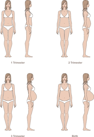 pregnant underwear: Vector illustration of pregnant womens figure.
