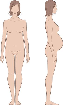 proportions: Vector illustration of pregnant female silhouette. Proportions in 3 trimester. Front and side views Illustration