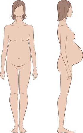 tummy: Vector illustration of pregnant female silhouette. Proportions in birth. Front and side views