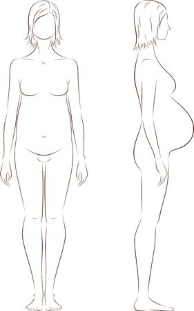 proportions: Vector illustration of pregnant female silhouette. Proportions in birth. Front and side views