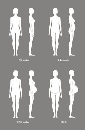 Vector illustration of pregnant female silhouette. Change in proportions from 1 trimester to birth. Front and side views