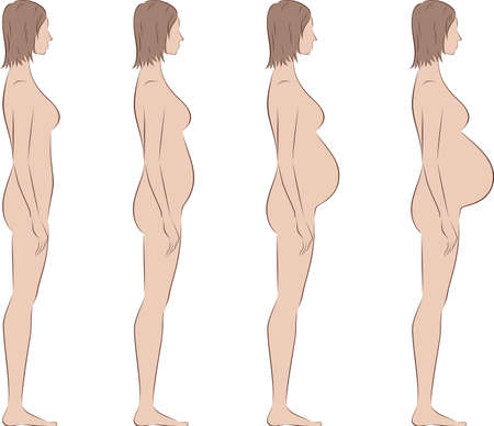 pregnancy exercise: Vector illustration of pregnant female silhouette. Change in proportions from 1 trimester to birth. Side view