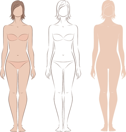 Vector illustration of womens figure. Front view