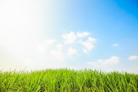 Suikerrietgebied met blauwe hemel Stockfoto
