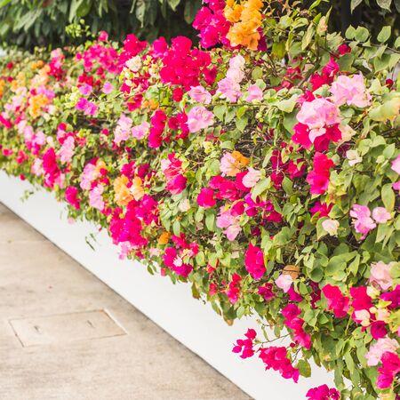 Colorful flower blossom in garden