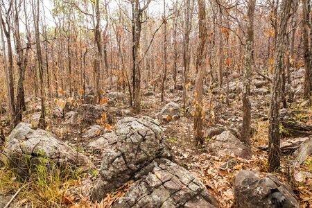 Dry forest Stock Photo - 96009974