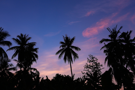 Silhouette coconut tree and twilight sunset sky background Stock Photo