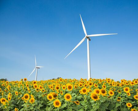 Wind turbine generator on sunflower blossom