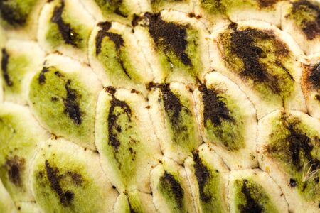 Custard apple fruit pattern Stok Fotoğraf
