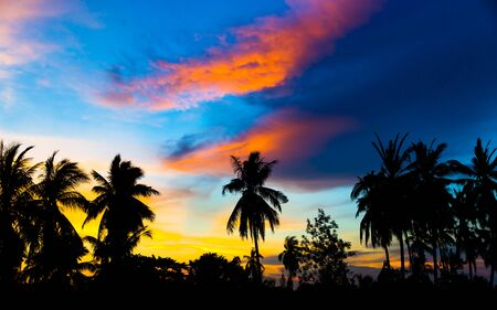 Silhouette coconut tree with sunset sky