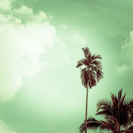 Beach palm tree on blue sky. retro filter Imagens - 134525074