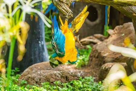 Colorful macaw parrot in forest Imagens