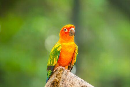 Small parrots bird clsoe up Imagens