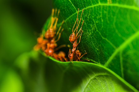 Red ant making nest close up
