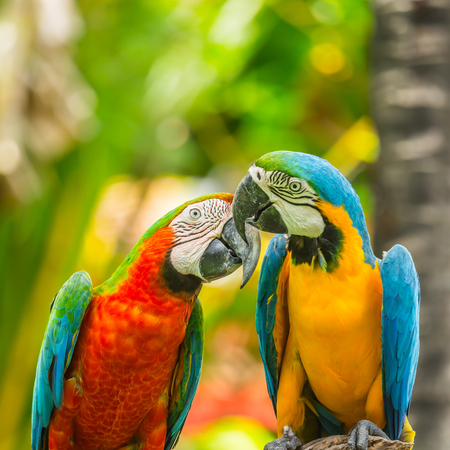 Perroquets ara en forêt