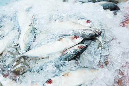 Makarelowa ryba w lodzie Zdjęcie Seryjne