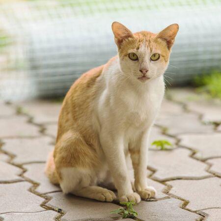 Stray cat close up