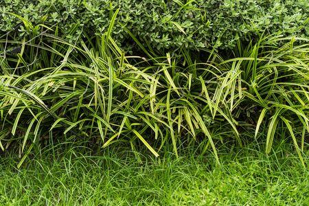 Small weed in garden clsoe up Imagens
